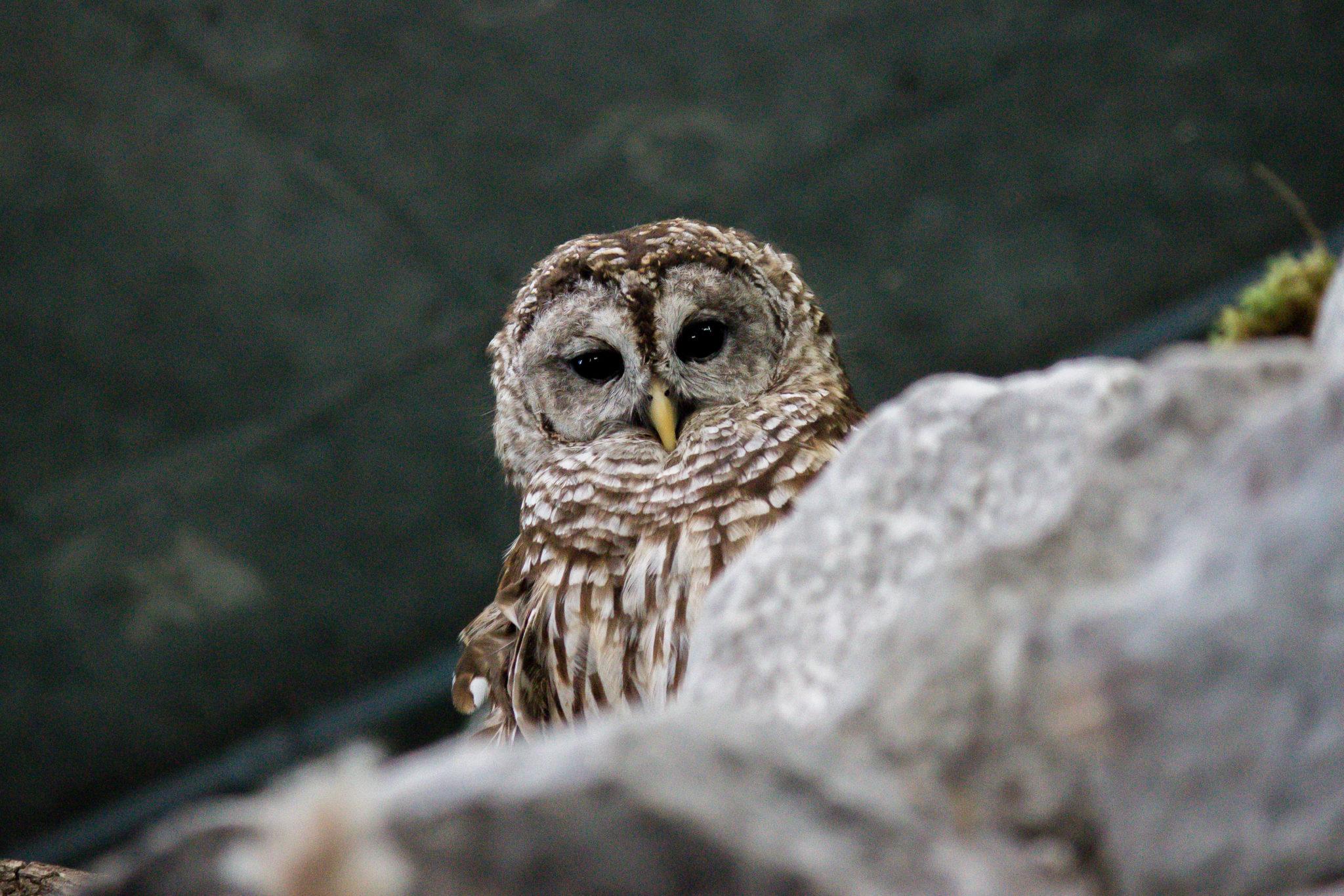 New Orleans Aquarium Owl