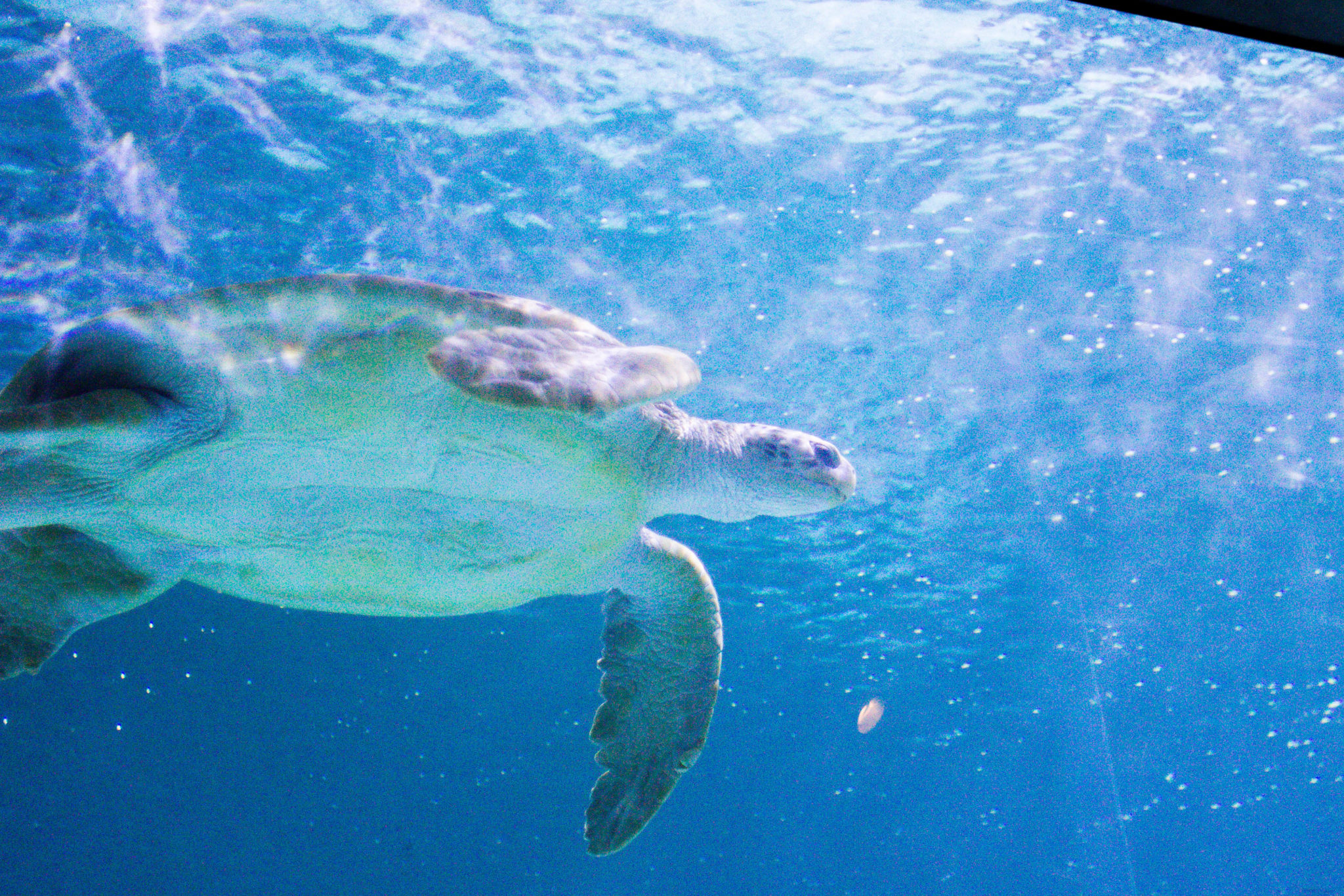 New Orleans Aquarium SeaTurtle